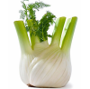 Fenchel.png